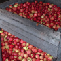How Cider Is Made at Our Mill